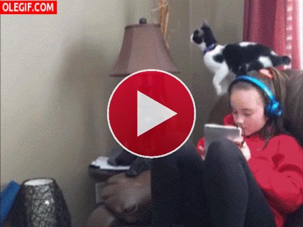 GIF: La que ha liado este gato