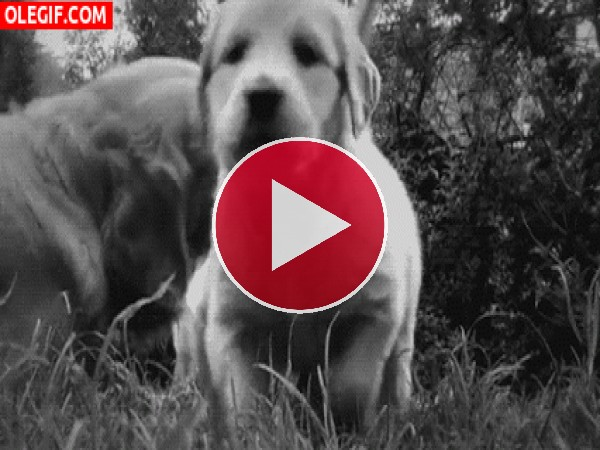 GIF: Un cachorro muy curioso