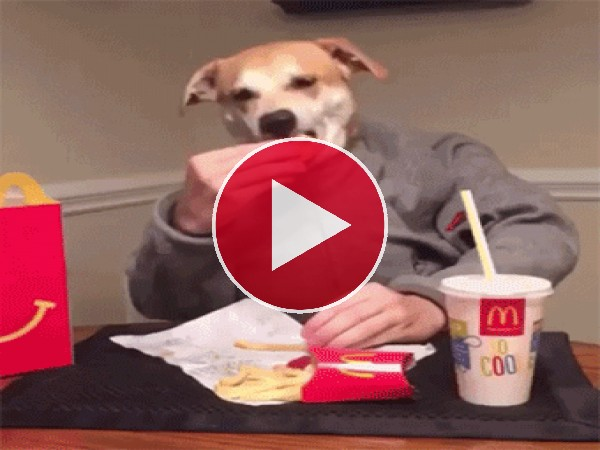GIF: Un perro humanizado
