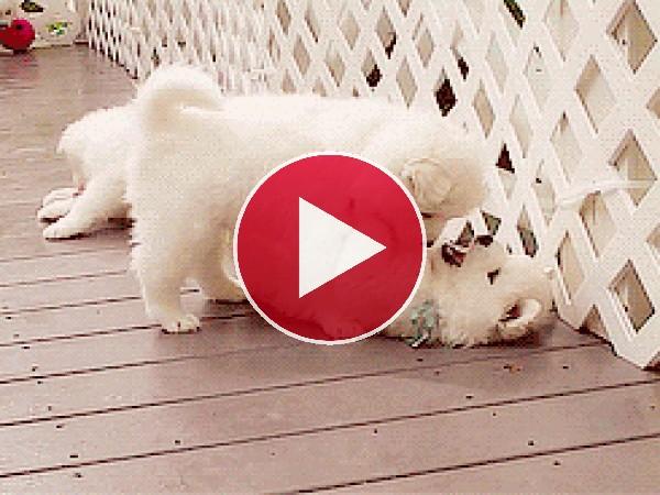 GIF: Estos cachorros son muy besucones