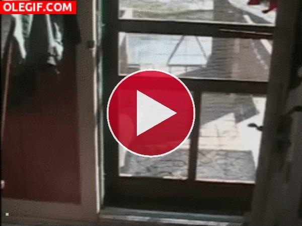 GIF: Mira por donde se cuela el gato