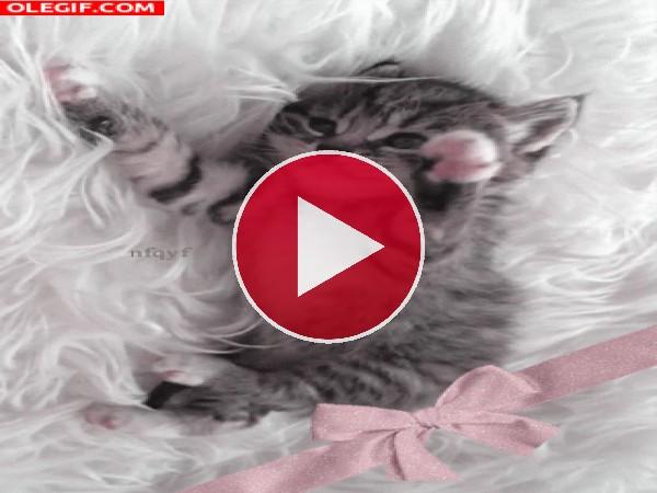 GIF: Un lindo gatito