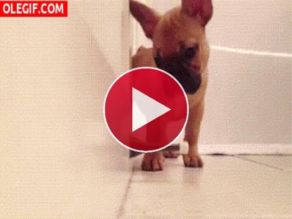 Este cachorro es muy curioso