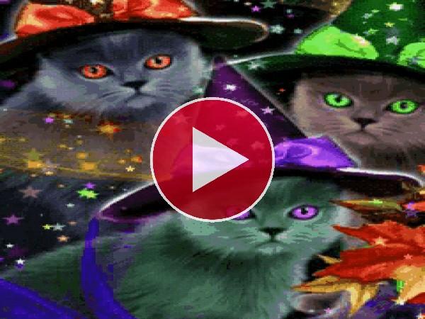 Gatos con sombreros de bruja