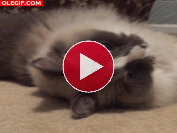 Mira a este gato bostezando