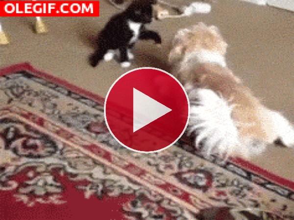 GIF: Gira perrito, gira...