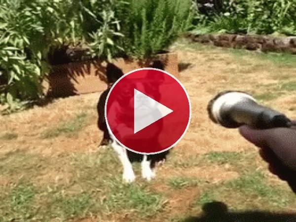 GIF: Parece que a este perro no le gusta el agua