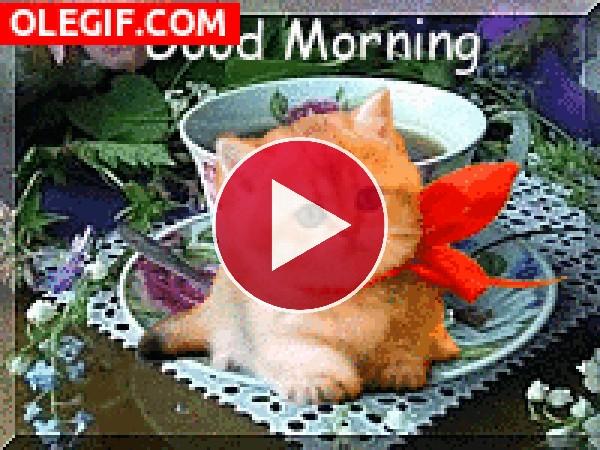 GIF: ¡Buenos días!