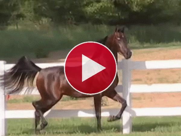 El trotar de un elegante caballo