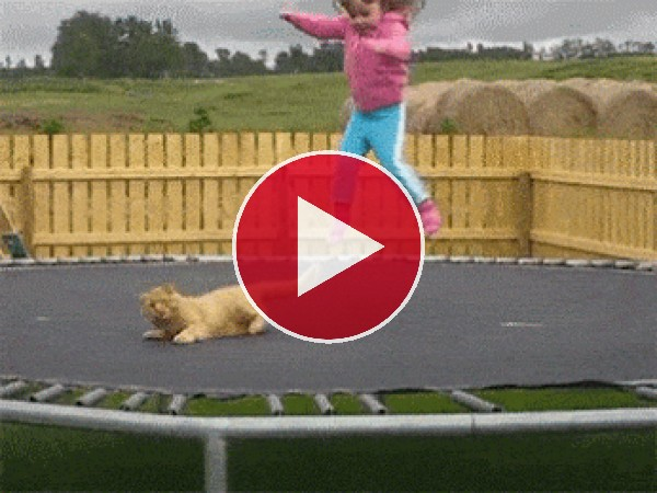 GIF: Este gato no tiene escapatoria
