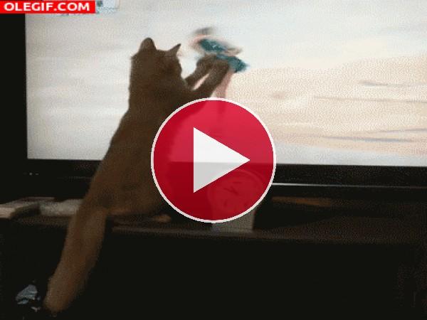 A este gato le gusta el patinaje artístico