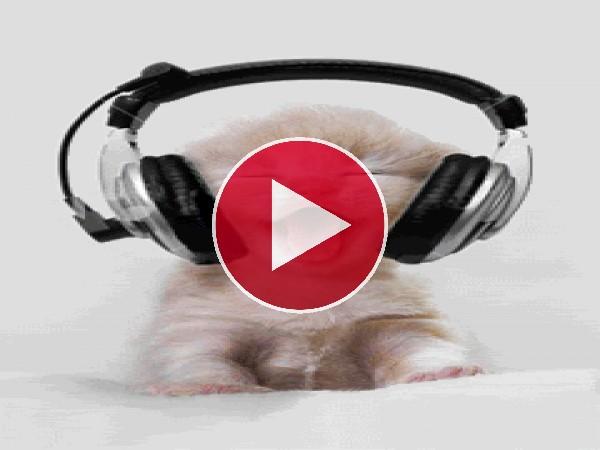 GIF: A este gatito le gusta la música