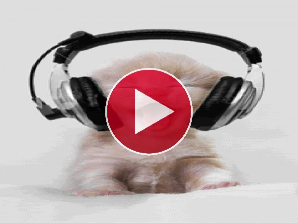 A este gatito le gusta la música