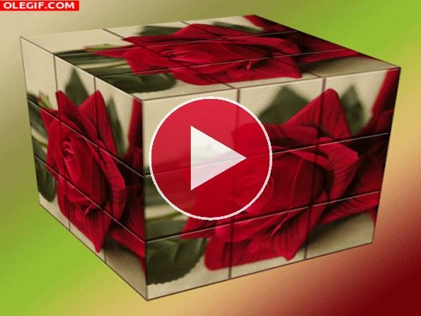 Rosas en un cubo