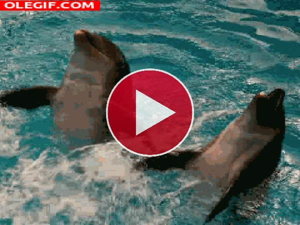 GIF: Dos divertidos delfines