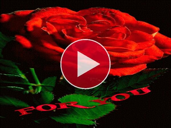 GIF: Esta rosa es para ti