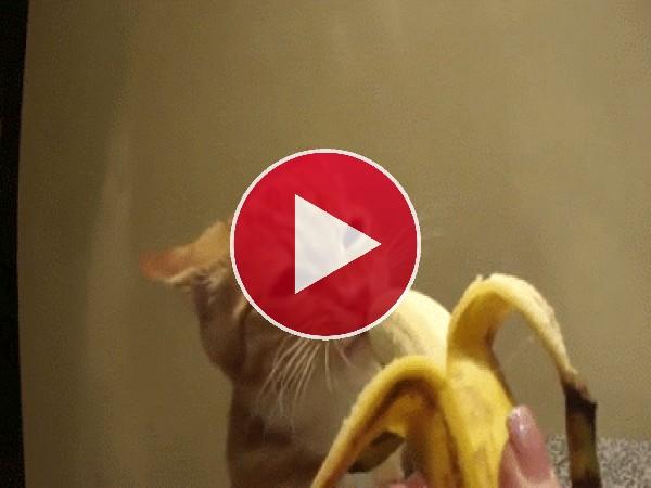 GIF: ¡Me gusta el plátano!