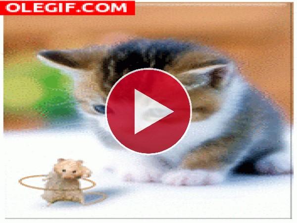GIF: Qué bien se mueve este ratoncillo...