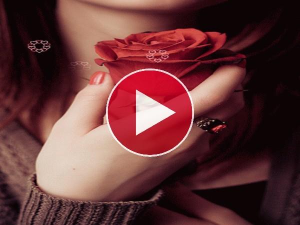 Una rosa entre mis manos