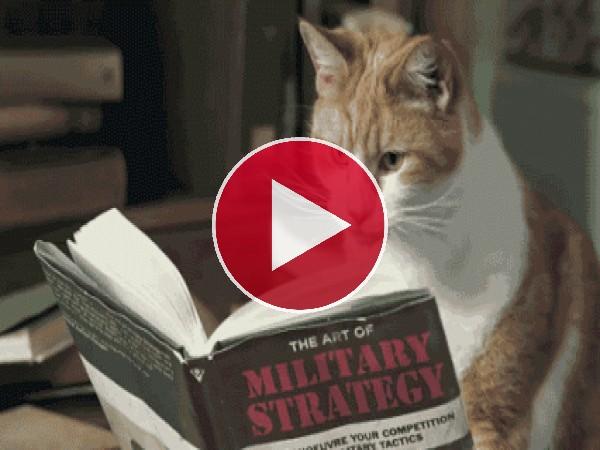 GIF: Leyendo un libro de estrategia militar