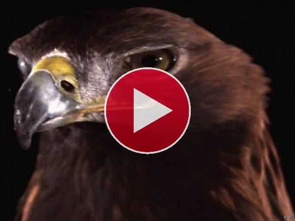 GIF: La mirada del águila