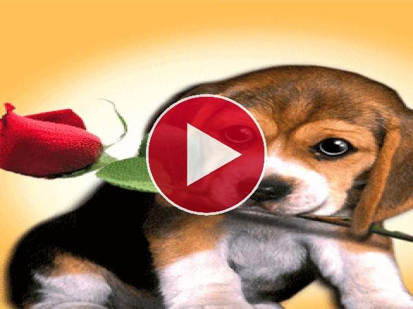 GIF: Te regalo una rosa