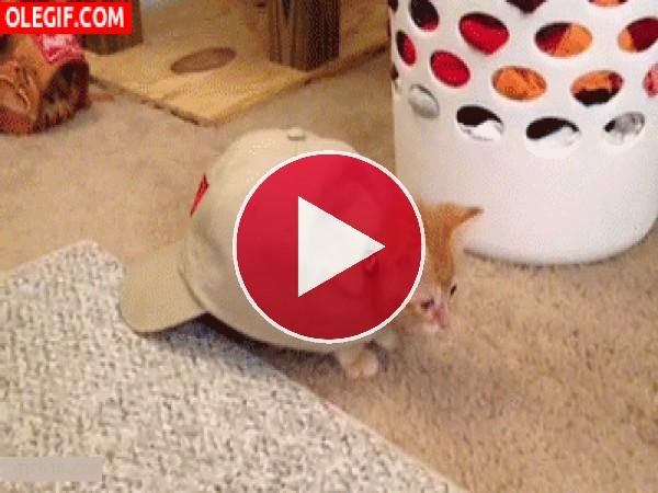 GIF: Un gato muy moderno