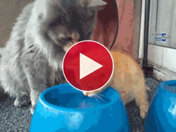 GIF: Bebe agua hijo mio