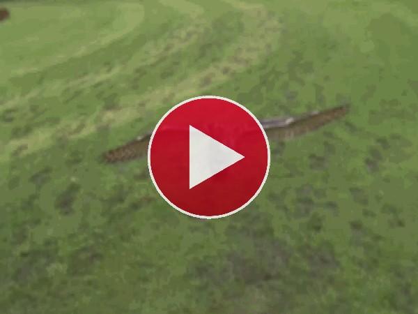 GIF: El vuelo del búho