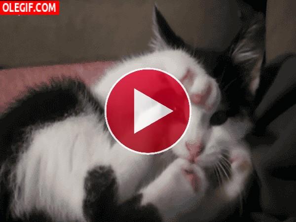 GIF: ¿Qué le pasa a este gato?