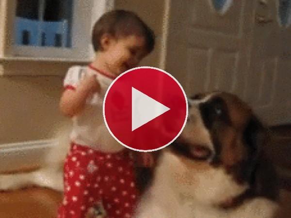 GIF: Quiero a mi perro