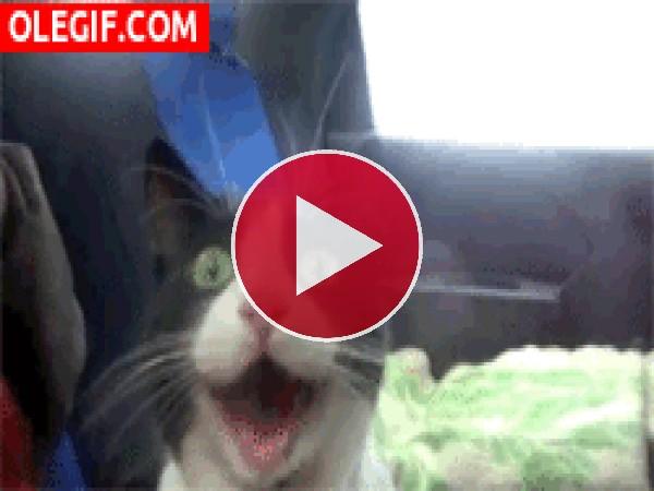GIF: Un gato emocionado