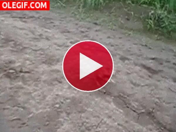 GIF: Un hámster con complejo de canguro