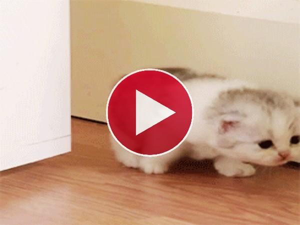 GIF: Un gatito sigiloso