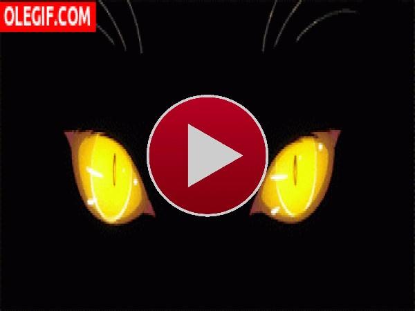 GIF: Mirada felina