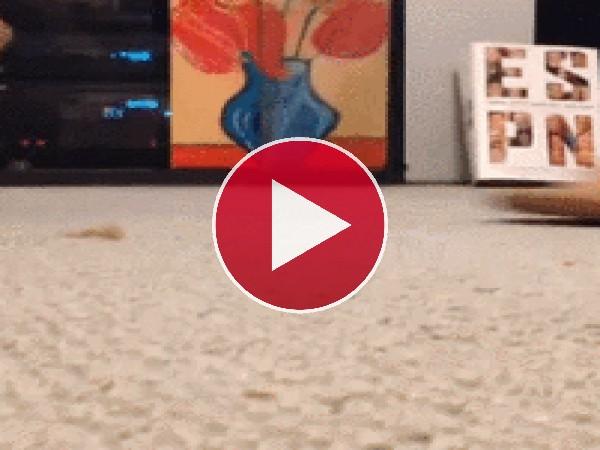 A este gato le gusta la sandalia