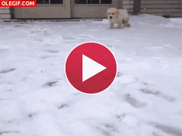 GIF: Jugando en la nieve