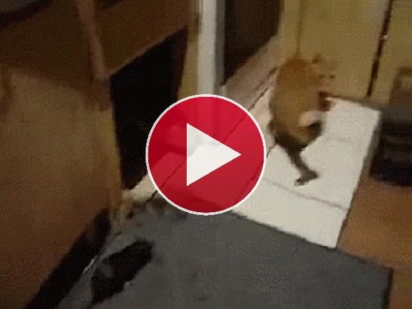 GIF: El ataque de la rata