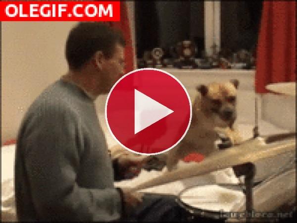 Mira a este perro tocando la batería