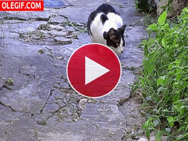 GIF: ¿Qué busca el gato?