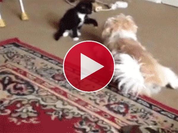 GIF: ¡Gira perrito, gira!