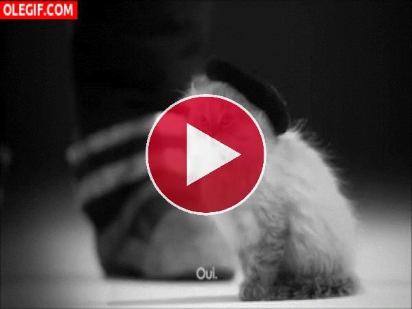 GIF: Mira a este elegante gato