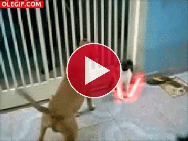 GIF: La que está liando este gato