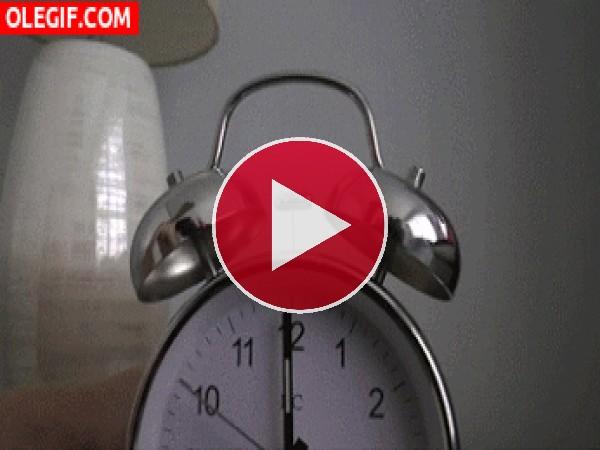GIF: ¡Hora de levantarse!