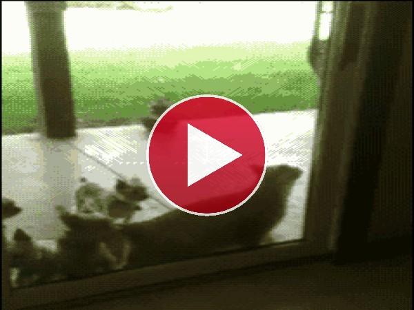 GIF: Tranquilos... ya abro yo la puerta