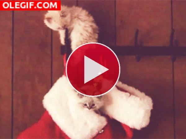 Gatitos jugando entre los adornos navideños