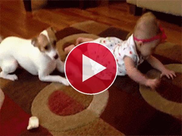 GIF: Mira cómo gatea este perro
