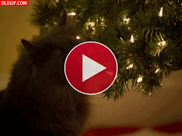 GIF: Este gato se come el árbol de Navidad