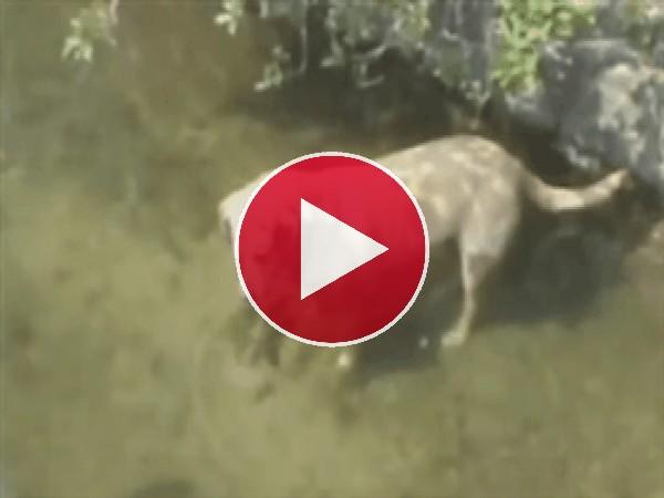 GIF: El perro pescador