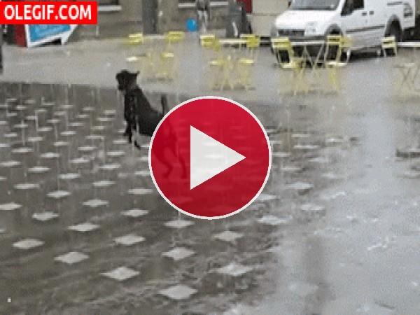 GIF: Este perro se lo pasa en grande